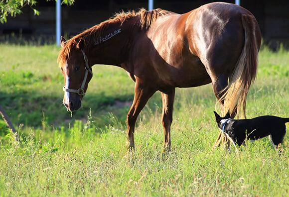 Beaucoup de cavaliers rêvent d'avoir leur propre cheval... Encore faut-il savoir où l'héberger !