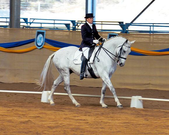 """A la fin de la détente, le cheval est physiquement et psychologiquement prêt à attaquer le travail """"sérieux""""."""