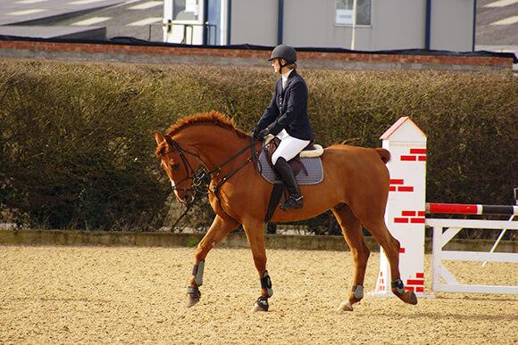Avant de vous lancer sur votre parcours, prenez quelques instants pour vérifier la disponibilité de votre cheval et l'habituer au terrain.