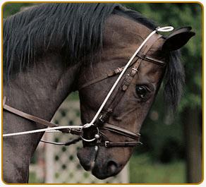 Ce cheval est bloqué dans une position statique, l'enrênement mériterait d'être réglé plus lâche pour être vraiment efficace