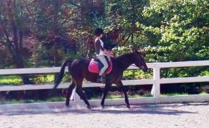 Pour éviter les mauvaises surprises, essayez le cheval au moins une fois avant de le prendre en demi-pension