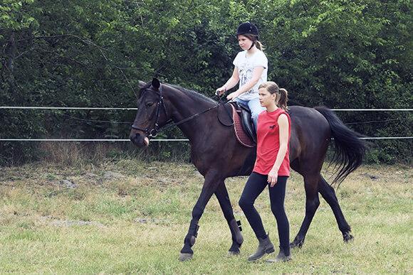 Prendre un cheval en demi pension - Chevaux gratuits ...