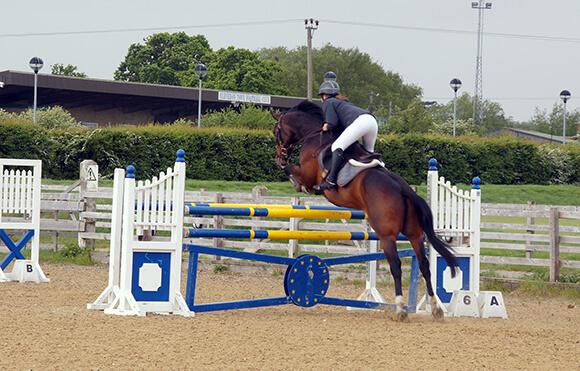Les lignes sont un excellent exercice pour améliorer le geste, la réactivité et la coordination du cheval.