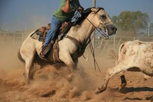 Le reining tient son origine dans le travail du bétail