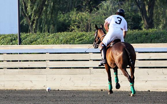 Varier le travail permet d'avoir un cheval plus réactif. Et si vous vous essayiez à de nouvelles disciplines ?