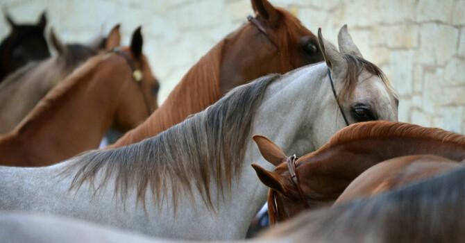 acheter un cheval : quel sexe choisir ?