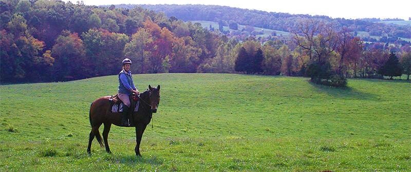 Partir en balade, à pied ou monté, permettra de remuscler votre cheval en douceur tout en préservant son moral.