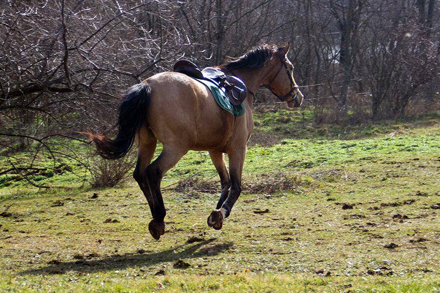 Sur un cheval chaud une chute est vite arrivée... Pour l'éviter, désamorcez la bombe au plus vite !