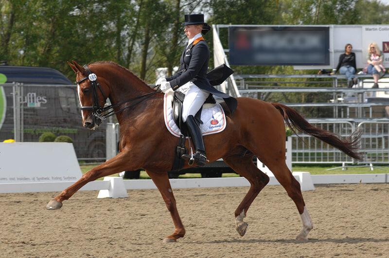 Les allongements sont un parfait exemple de l'équilibre longitudinal : à condition de garder un cheval droit, en avant et qui se tend !
