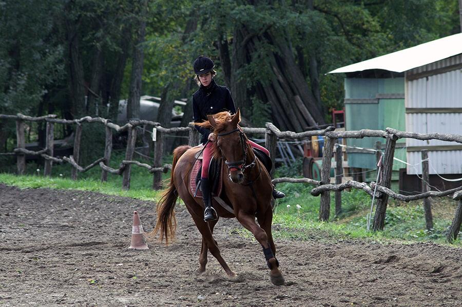 Si votre cheval commence à prendre le mors aux dents, mettez-le sur un cercle pour reprendre le contrôle.