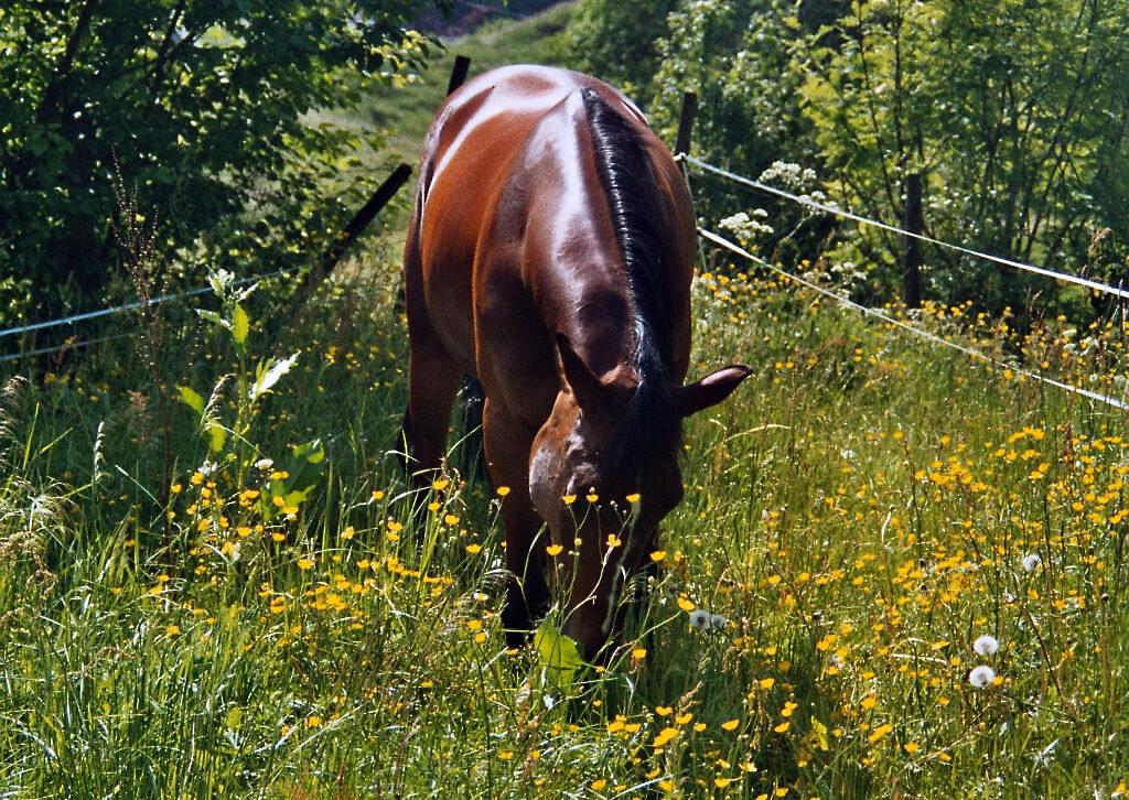 Utiliser la médecine douce pour soigner votre cheval peut s'avérer être très efficace et économique. A condition de bien se renseigner au préalable !