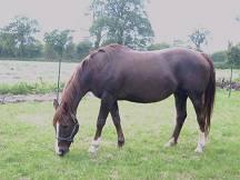 Les chevaux trop gros sont davantage exposés à certaines pathologies telle que l'arthrose
