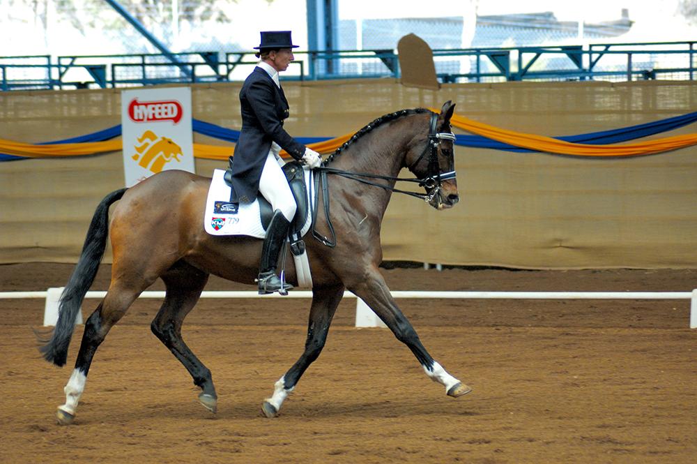 Ce cheval présente un équilibre longitudinal parfait : il est ainsi léger dans sa bouche, dans une bonne impulsion.