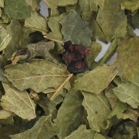Les feuilles de cassis peuvent être bénéfiques pour faire maigrir un cheval