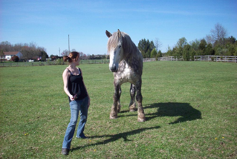 L'éthologie permet de mieux comprendre son cheval afin de créer une relation basée sur la confiance et le respect.