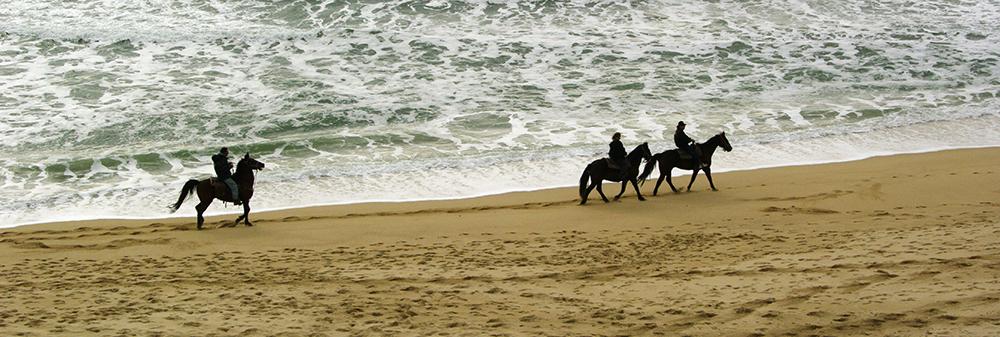En balade collective, les chevaux à l'arrière ont tendance à chauffer davantage et essayent de rattraper les autres en trottinant ou en prenant le galop.