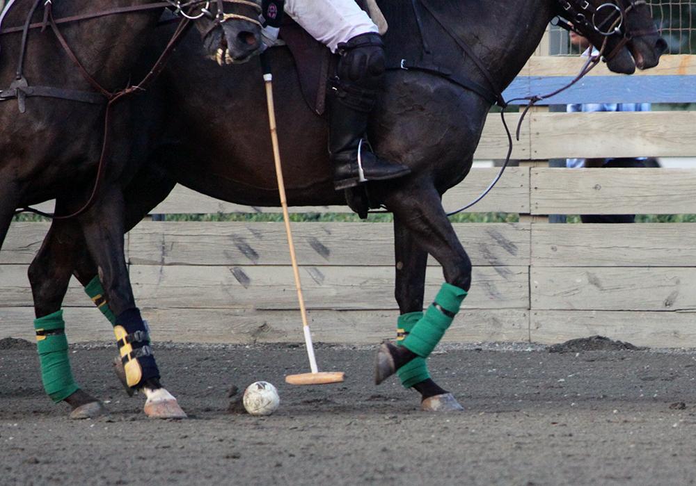 Le cheval doit être équipé de protections (guêtres fermées ou bandes de repos) et d'une martingale fixe.