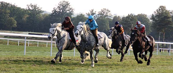 Une course de chevaux percheron lors du Mondial du Cheval Percheron au Haras du Pin