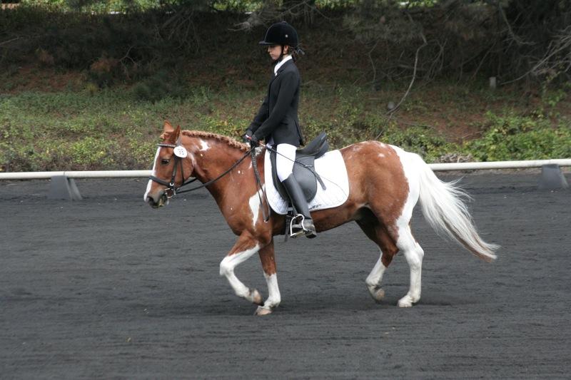 Ce cheval n'est pas dans une bonne attitude de travail : dos creux, postérieurs à la traine et angle tête/encolure trop ouvert. Son dos ne fonctionne donc pas correctement. © Joe Pallas