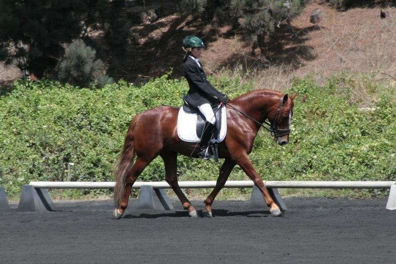 Ce cheval est dans une bonne attitude de travail. - © Joe Pallas