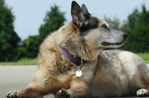 Le recours à un chien de garde peut se révéler très efficace.