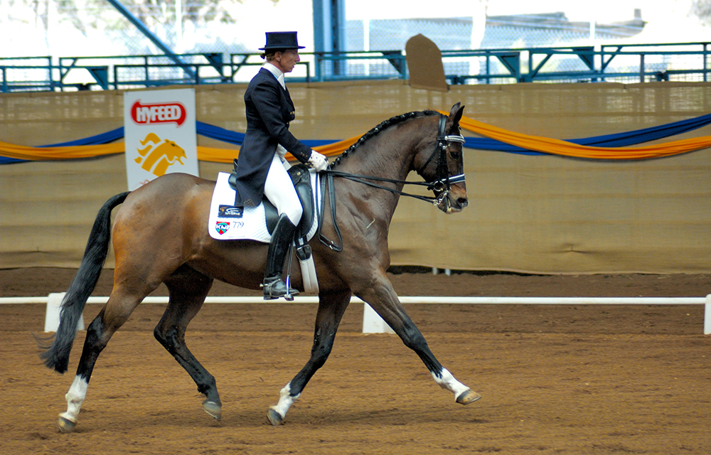 Durant un allongement, le cavalier demande à son cheval d'augmenter l'amplitude de sa foulée, sans modifier la cadence.