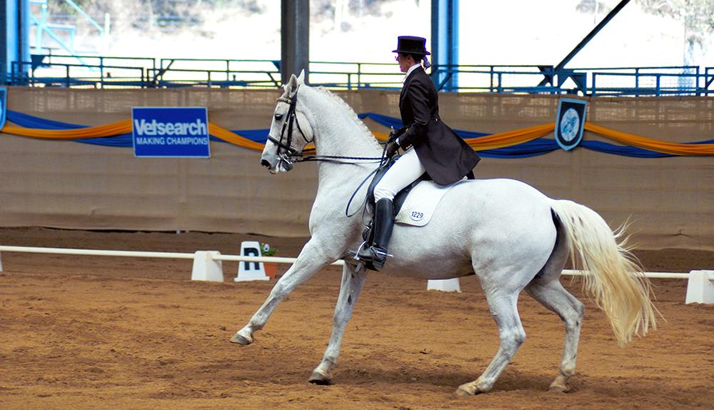 Les pirouettes au galop demandent une grande impulsion de la part du cheval.