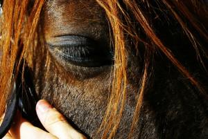 abril-cavall-horse-1163059-h