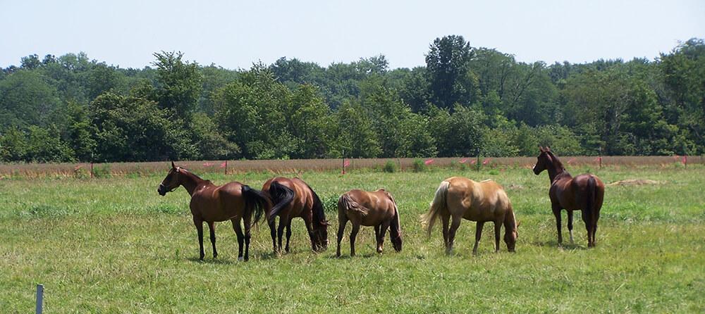Si les chevaux vivent au box, vérifiez qu'ils aient bien la possibilité de pouvoir sortir régulièrement au pré ou au paddock.