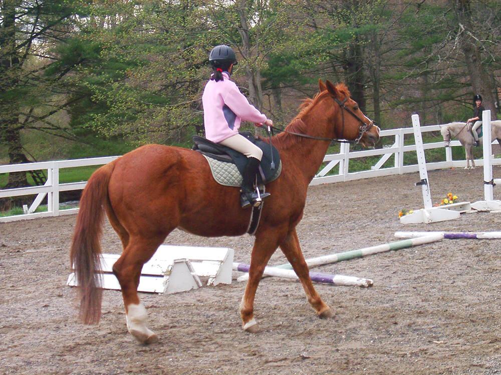 Assistez aux leçons d'équitation pour vous rendre compte de la qualité du cors enseignant et voir les disciplines pratiquées.