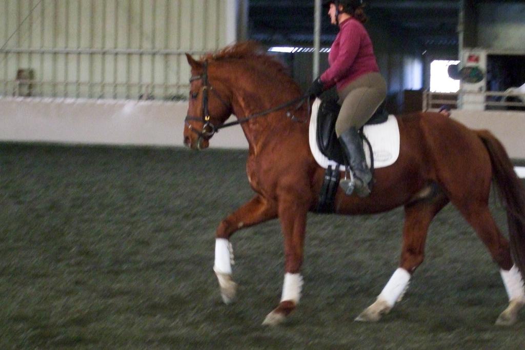 améliorer la qualité du galop du cheval