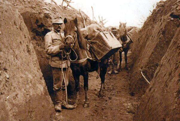 Lle Hurçul était utilise comme cheval de bât dans les tranchées