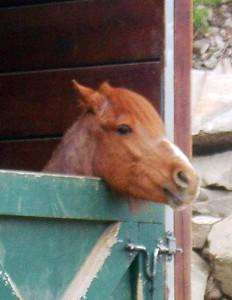 Vérifiez que votre cheval soit dans des installations adaptées et, s'il vit au box, qu'il puisse aller au paddock régulièrement.