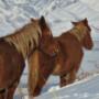 cheval en hiver