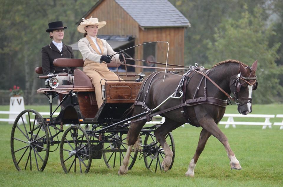 Claire LEFORT et Oulala d'Ecarnoy sur une épreuve de dressage