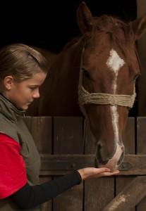 Mettre son cheval au pair signifie devoir le partager avec de nombreux autres cavaliers... Si vous êtes plutôt du genre possessif, cette solution ne vous conviendra pas.
