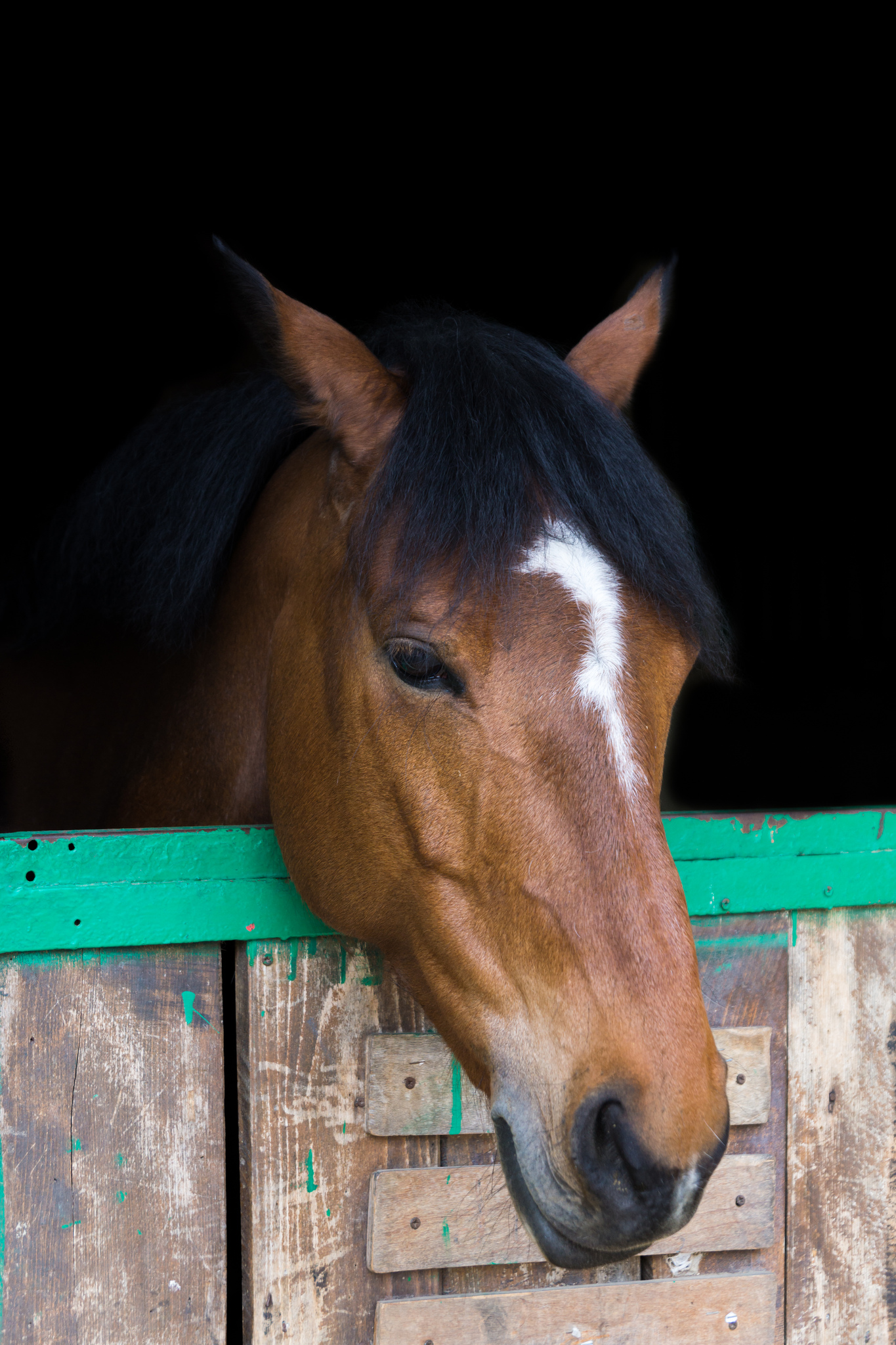Dans une écurie, il est nécessaire de vérifier si plusieurs chevaux sont atteints