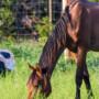 cheval maigre