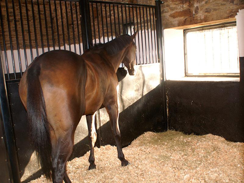 Pour un cheval qui tousse, une litière de copeaux est préférable. © Haras de la Banche