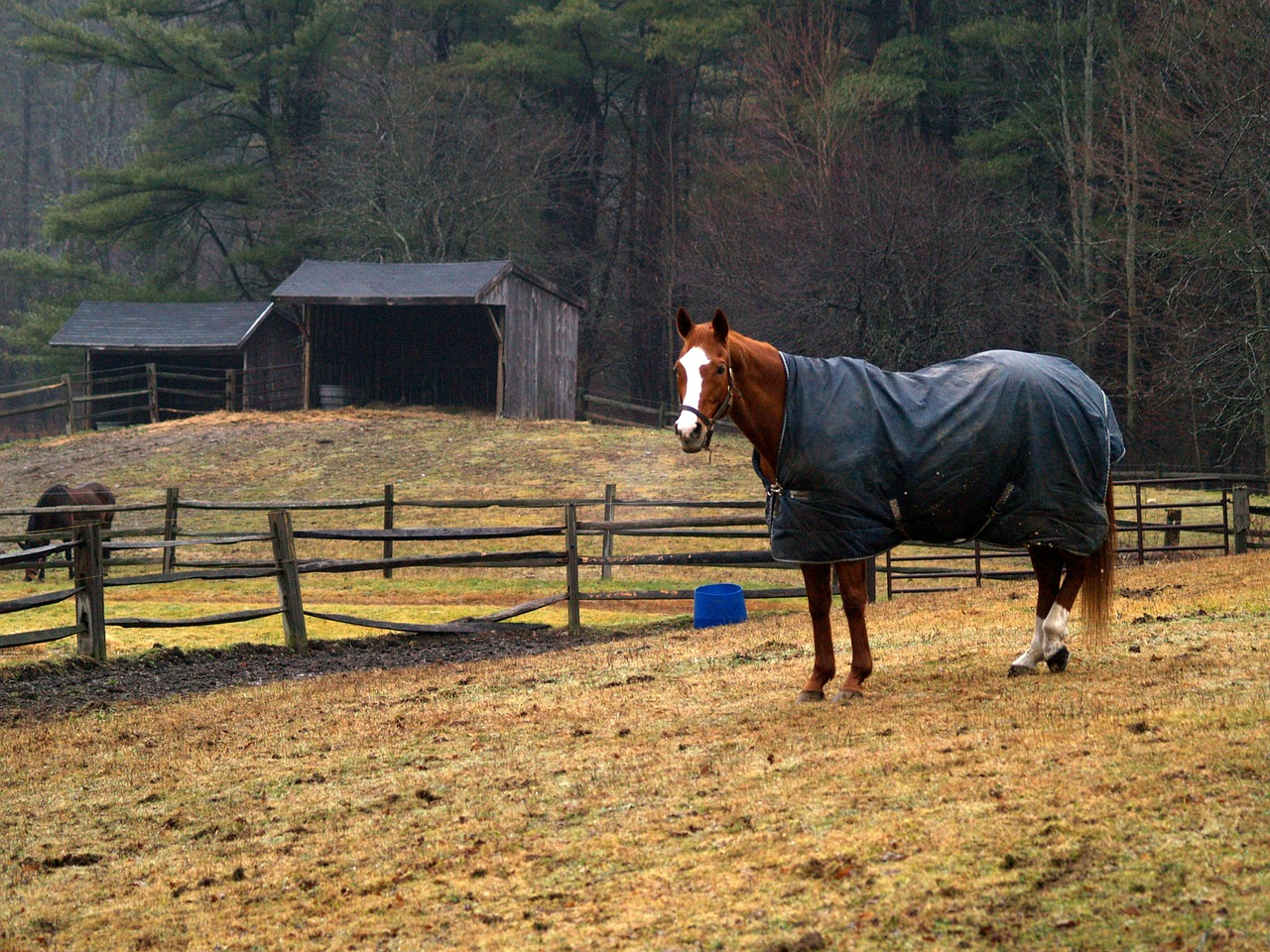 horse-582472_1280