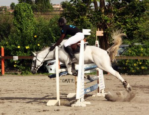 Parfois c'est la négligence du cheval qui conduit à la chute