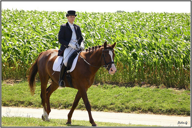 En route vers la sérénité et l'harmonie avec le cheval