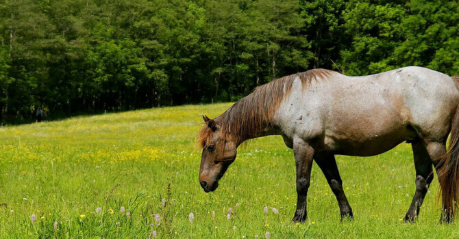 panier cheval