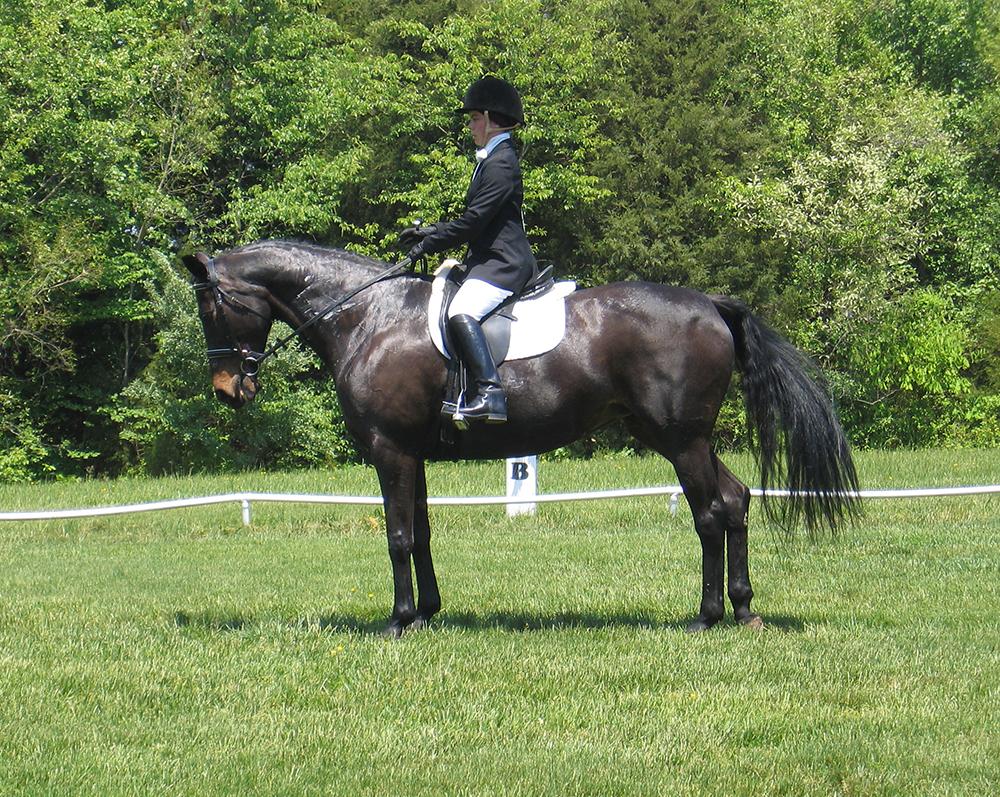 Demandez le reculer après un arrêt de qualité : si votre cheval est traversé à l'arrêt, le reculer sera plus difficile à obtenir.