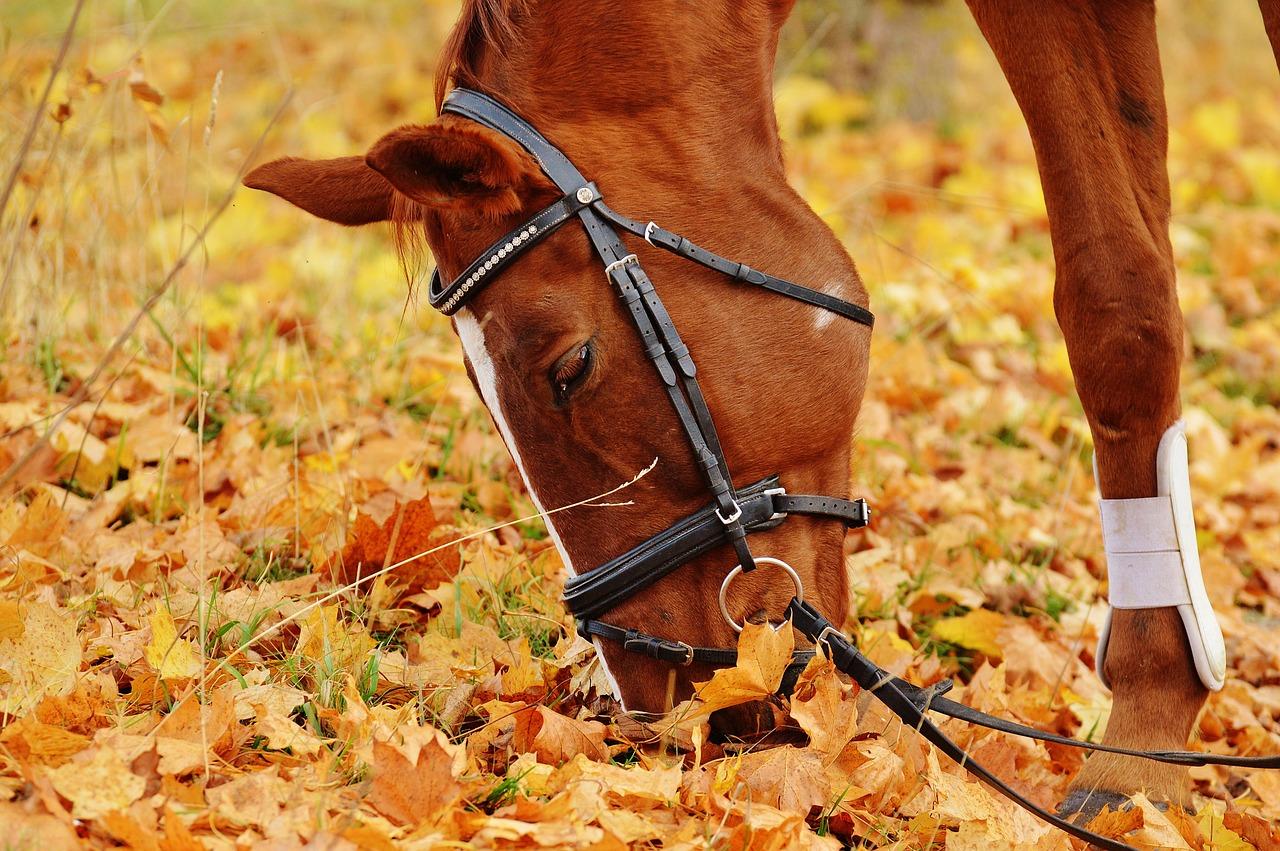assurer son cheval