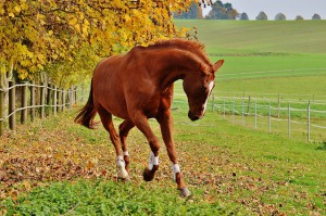 Selon que vous hébergiez votre cheval chez vous ou en pension, au pré ou au box, le prix moyen mensuel peut varier considérablement.