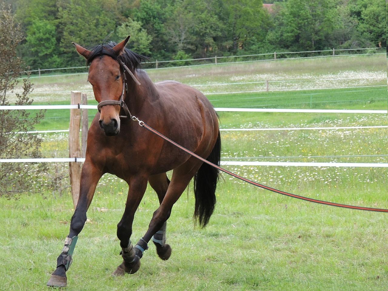 horseback-riding-364241_1280