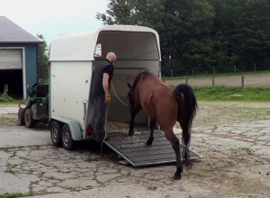 howto-load-a-horse-in-a-van