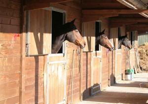 boxes_chevaux