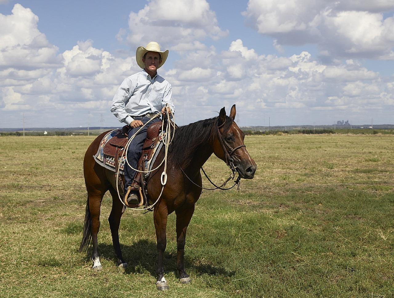vente de chevaux américains